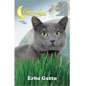 erba-gatto